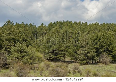 Forest in Balkan mountain Murgash area, Bulgaria