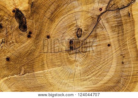 Texture from cross section of the tree, natural grunge vintage  background