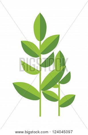 Tea plant green vector leaves isolated on white. Some tea plant nature herb. Flat tea plant herb drink. Tea plant healthy drink.