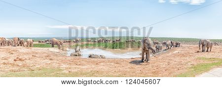 A large group of elephants at a muddy waterhole** Note: Visible grain at 100%, best at smaller sizes