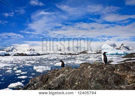 Penguins On The Stone Coast