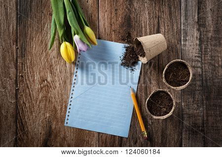 Closeup of peat planting pots filled with soil and tulips with sheet of blank paper on rustic wooden background. Gardening and planting seedlings, spring is here concept. Copyspace.
