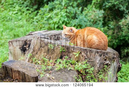 Cat sleeping on an old stump in summer day