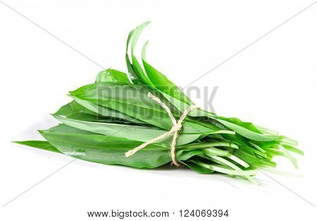A bunch of wild garlic leaves on a white background