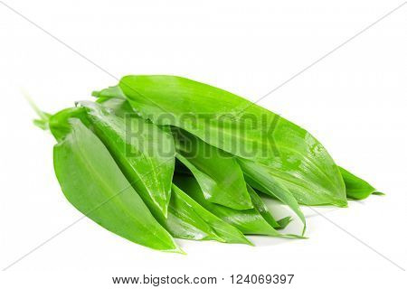 Leaves of wild garlic on a white background