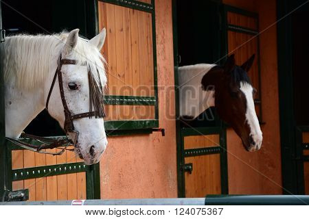 Two peaceful horses posing on their stable.