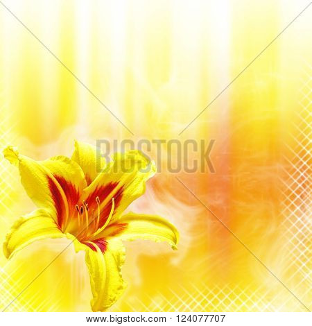 close-up hemerocallis flowers on yellow and red background