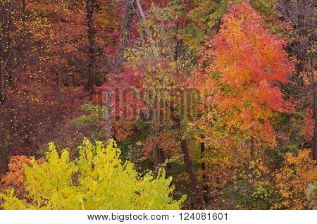 Rustic woodland scene of autumn leaves changing colors