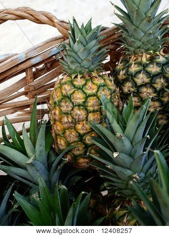 Pineapples in Whicker Basket