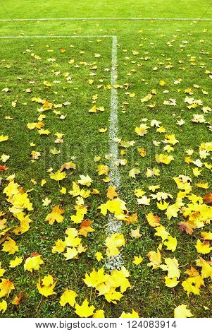 End Of Football Season. Dry Maple Leaves Fallen On Ground Of Natural Green Football Turf With Painte