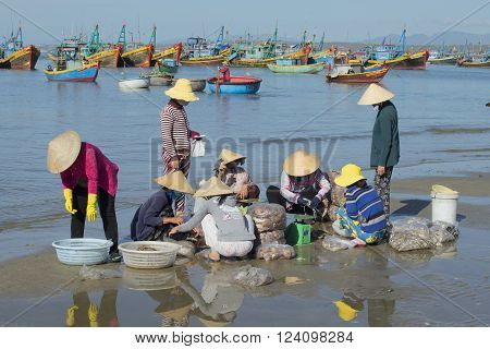 MUI NE, VIETNAM - DECEMBER 25, 2015: Group of vietnamese women examine the catch in the fishing harbor of Mui Ne