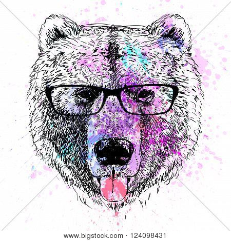 bear fashion colorful character portrait with glasses