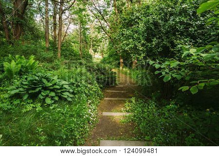 Empty Lane, Path, Way in summer deciduous forest Trees.