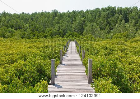 Walkway made from wood and mangrove field. Boardwalk in Tung Prong Thong Golden Mangrove Field. Rayong Province, Thailand.