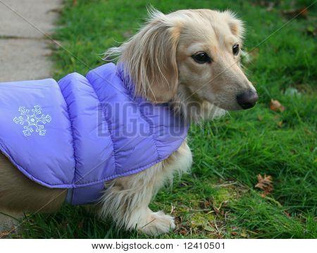 cachorro disfrutando del aire libre