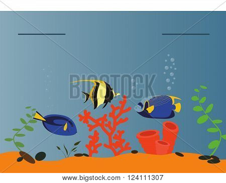 Tropical sea graphic template. Pacific ocean. Vector illustration