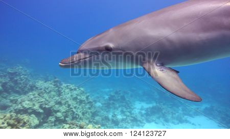 photo of Dolphins Swims Near Divers underwater scene ** Note: Soft Focus at 100%, best at smaller sizes