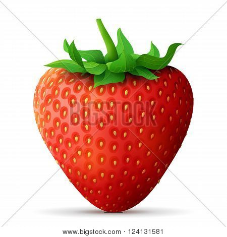 Strawberry fruit close up. Strawberry with leaves isolated on white background. Qualitative vector illustration about strawberry agriculture fruits cooking gastronomy etc. It has transparency blending modes gradient