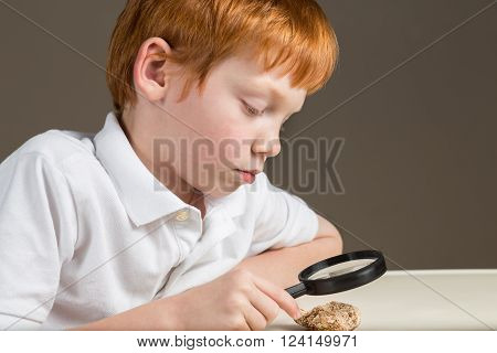 Seven year old boy with red hair studying a coquina rock through a magnifying glass.