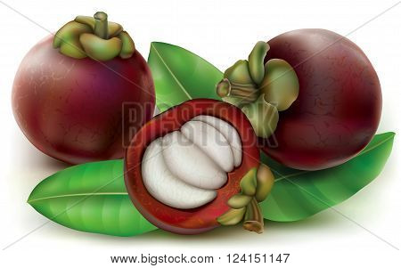 Mangosteen fruits with fruit cut open. Garcinia mangostana. Vector illustration