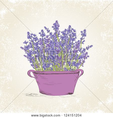 Hand drawn lavender flowers in vintage pot . Hand drawn design for Thank you card Greeting card or Invitation. Vector illustration.