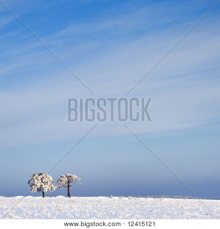 Tree In Frost And Landscape In Snow Against Blue Sky