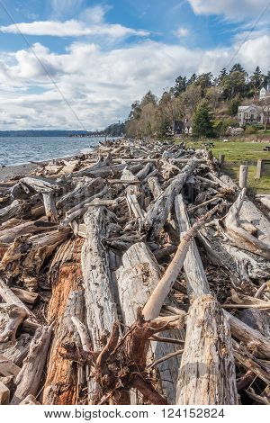 Piles of driftwood line the shore in Normandy Park Washington.