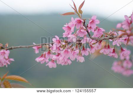 flower flowers pink flower flower background flower nature
