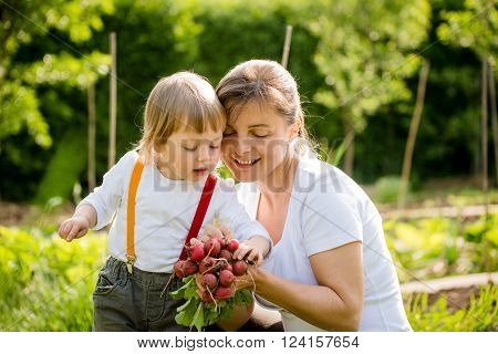 Little child looking on bunch of freshly picked up red radishes in mother's hands - in vegetable garden