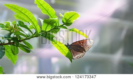 Beautiful tropical butterfly resting on a leaf.