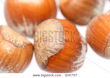 Little Hazelnuts