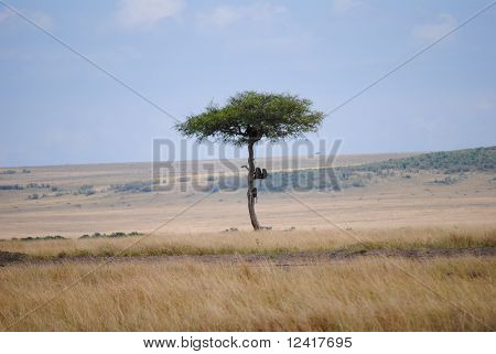 Peace and silence in african savannah