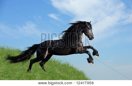schwarzes Pferd spielen auf dem Feld