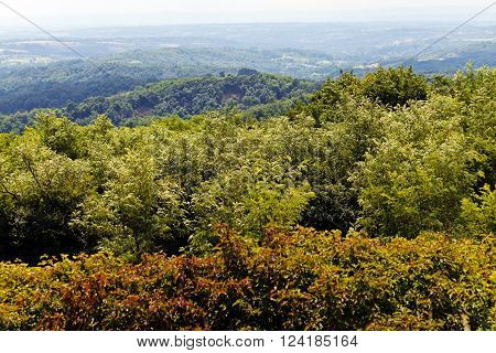 Green Forest Treetops