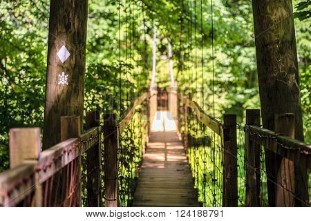 Hanging Bridge on Sheltowee Trace trail in Red River Gorge in Kentucky