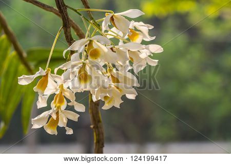all cute white orchid on nature background ** Note: Shallow depth of field