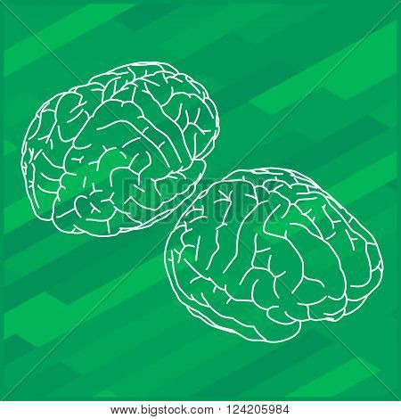 Vector outline illustration of human brain. Human brain isometric view.