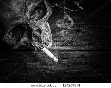 Still Life Skull And Cigarette Smoke.