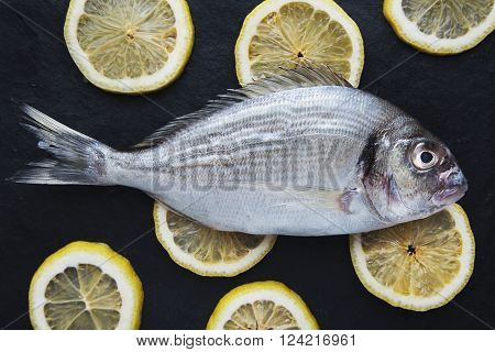 Presentation Of Fresh Sea Bream Isolated On Rounded Lemon Clices On Black Stone Surface, Top View.re
