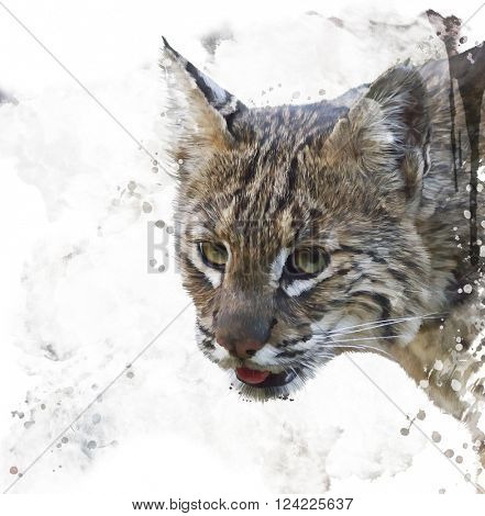 Digital Painting of Wild Bobcat Portrait