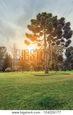 Nuwara Eliya, Sri Lanka. Queen Victoria Park In the sunlight. Victoria Park is located in the heart of the alpine resort of Nuwara Eliya - the