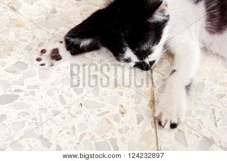 Close up with kitten cat foot color white and black
