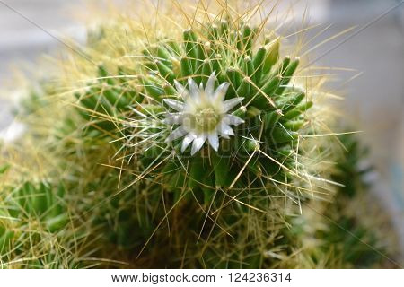 roomed flowering green cactus with long prickly needles