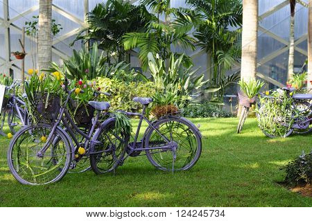 Several painted bicycles on display within the temperate greenshouse at chenshan botanical gardens shanghai china.