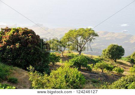 Mango Orchard