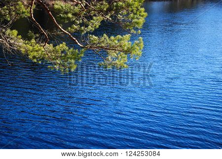 Sunlit pine tree branches by a deep blue water in the woods