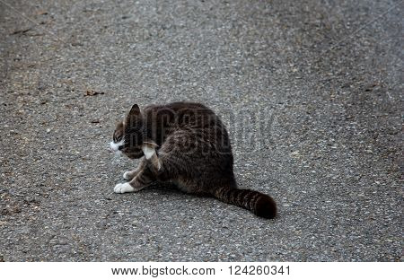 A cat on asphalt in early spring time in bavaria