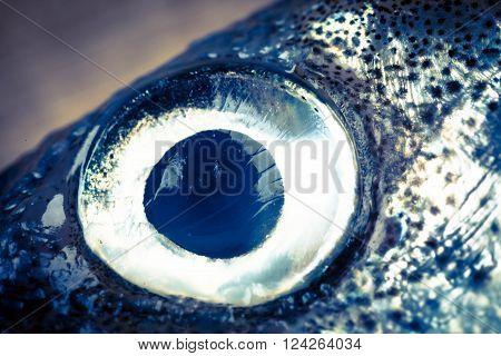 smelt fish eye  close up toned photo