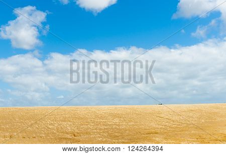 Rural land with golden barley crop ready for harvest bent and moving iin high wind under white cumulus clouds and blue sky in Manawatu Wanganui near Bulls New Zealand