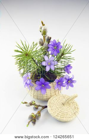 Violets pine and pussy-willow in a small basket in a white background